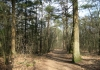 Appelscha_-_Drents_Friese_Wold_5525