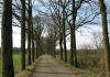 Appelscha_-_Drents_Friese_Wold_5526
