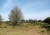Appelscha_-_Drents_Friese_Wold_5527
