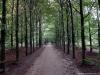 Arnhem: Warnsborn