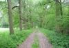best_-_boxtel_-_het_groene_woud_9633