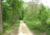 best_-_boxtel_-_het_groene_woud_9635