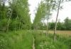 best_-_boxtel_-_het_groene_woud_9637