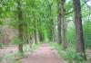 best_-_boxtel_-_het_groene_woud_9638