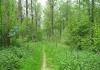 best_-_boxtel_-_het_groene_woud_9639