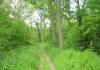 best_-_boxtel_-_het_groene_woud_9640