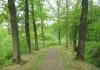 best_-_boxtel_-_het_groene_woud_9641