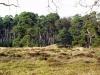 Deelen - Deelerwoud
