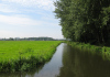 Delfgauw_-_het_Bieslandse_Bos_1528