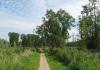 Delfgauw_-_het_Bieslandse_Bos_1529