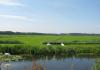 Delfgauw_-_het_Bieslandse_Bos_1534