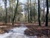 Ede: Edesche Bosch en Hindekamp