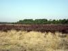 Ede: Edesche Heide, Kreelsche Zand en Hindekampen