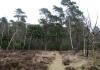 Ede_-_Planken_Wambuis_en_Zuid_Ginkel_0559