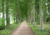 Eefde_-_Wandeling_Huis_de_Voorst_en_Huis_'t_Velde_1343