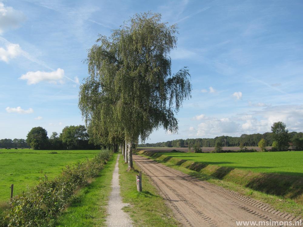 friese_woudenpad_-_boijl_-_de_hoeve_9409
