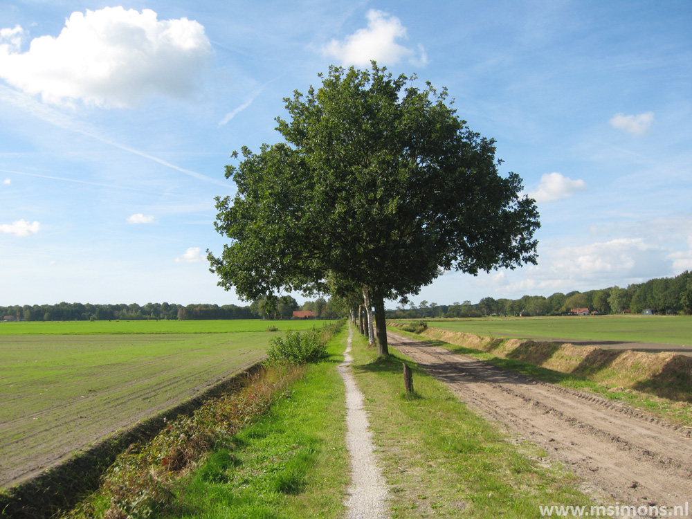 friese_woudenpad_-_boijl_-_de_hoeve_9410