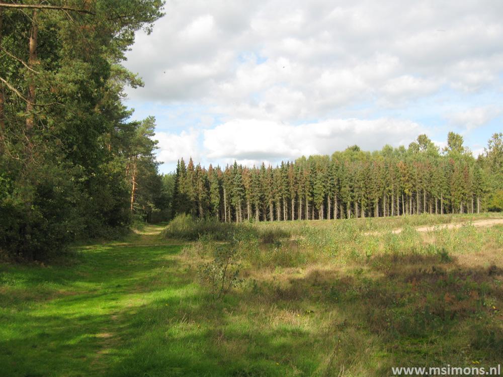 friese_woudenpad_-_boijl_-_de_hoeve_9414