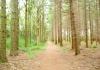 friese_woudenpad_-_boijl_-_wilhelminaoord_9343