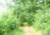 friese_woudenpad_-_boijl_-_wilhelminaoord_9347