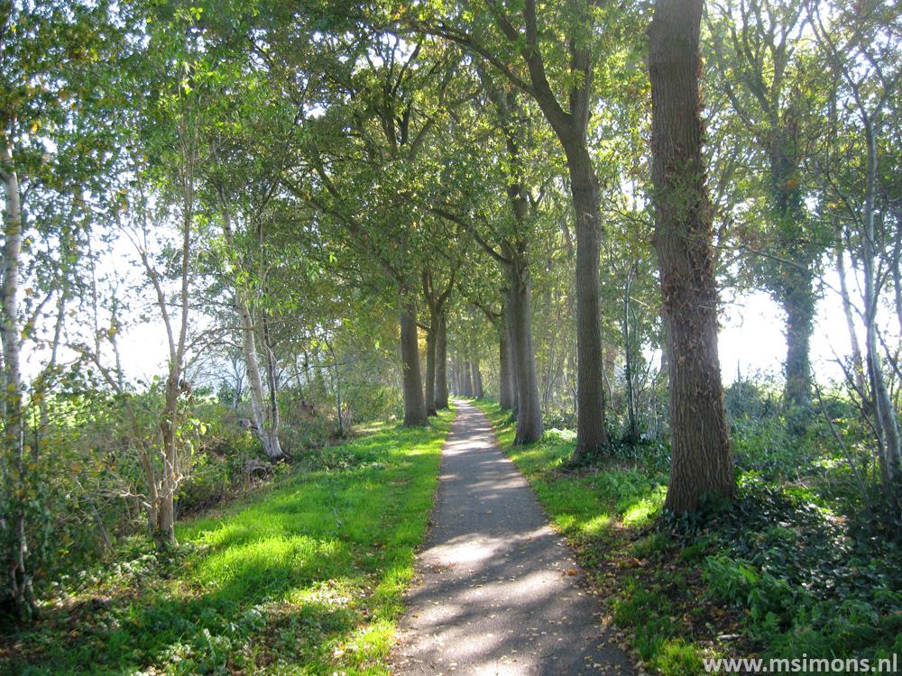 friese_woudenpad_-_oldemarkt_-_steenwijk_9423