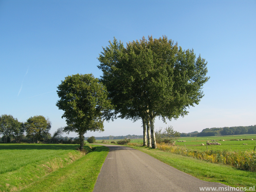 friese_woudenpad_-_oldemarkt_-_steenwijk_9424