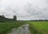 friese_woudenpad_-_ureterp_-_hoornsterzwaag_9376