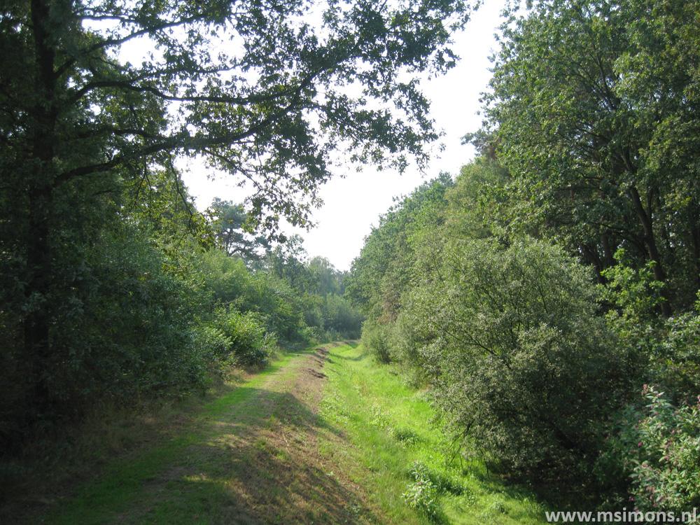 friese_woudenpad_-_wilhelminaoord_-_steenwijk_9356