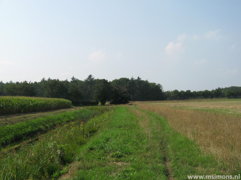 friese_woudenpad_-_wilhelminaoord_-_steenwijk_9358