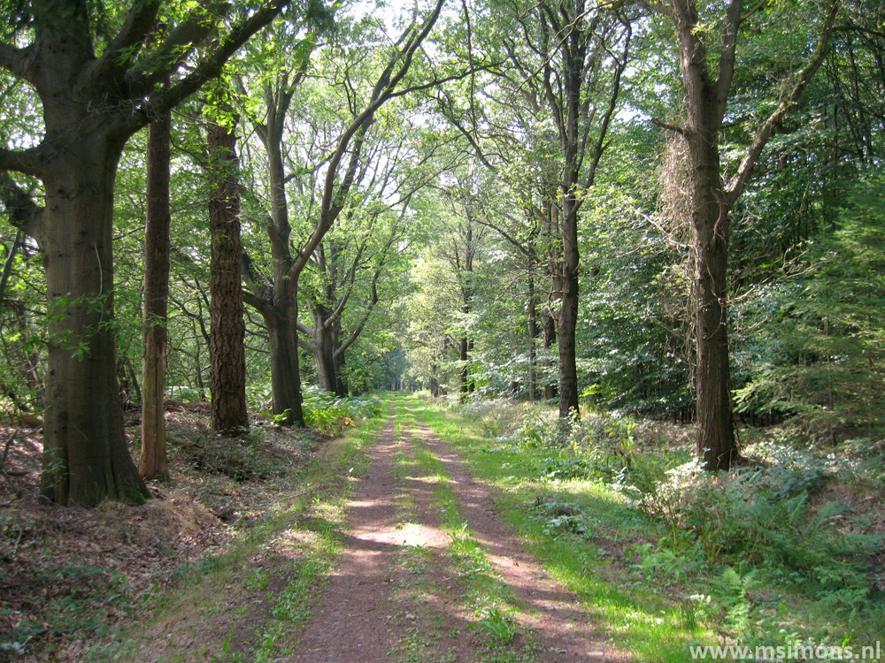 friese_woudenpad_-_wilhelminaoord_-_steenwijk_9362