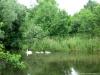 Gaanderen: Bielheimerbeek