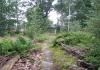 Gemeentegrens_Arnhem_Groenendaal_-_s_Koonings_Jaght_1584