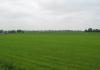 Gemeentegrens_Arnhem_-_Oosterbeek_-_Arnhem_Schuytgraaf_1267