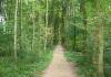 Hemmen_-_Natuurwandeling_buitengebied_Hemmen_0022