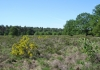 herkenbosch-nationaalparkdemeinweg9654