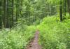 Hillesheim_-_Kylltal_Route_1484