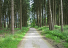 Horn-Bad_Meinberg_-_Holzhausen_Externsteine_9914