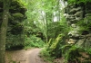 irrel_-_natuurpark_sud_eifel_8545