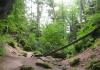 irrel_-_natuurpark_sud_eifel_8546