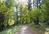 Lammersdorf_-_Im_Schatten_der_Baume_0088