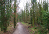 Langenboom_-_Langenboomse_Bossen_en_De_Kuilen_0315