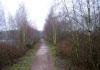 Langenboom_-_Langenboomse_Bossen_en_De_Kuilen_0317