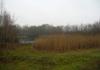 Langenboom_-_Langenboomse_Bossen_en_De_Kuilen_0320