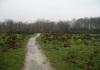 Langenboom_-_Langenboomse_Bossen_en_De_Kuilen_0324