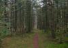 Langenboom_-_Langenboomse_Bossen_en_De_Kuilen_0332