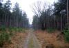 Langenboom_-_Langenboomse_Bossen_en_De_Kuilen_0333