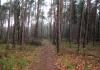 Langenboom_-_Langenboomse_Bossen_en_De_Kuilen_0334