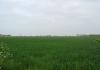 meliskerke_-_historie_en_prachtige_duinen_7253