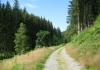 monschau_-_narzissengebiet_monschauer_land_8572