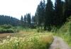 monschau_-_narzissengebiet_monschauer_land_8573